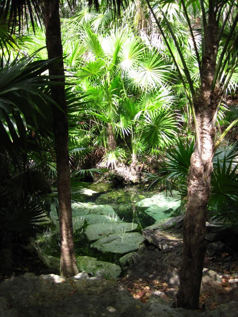 Mini cenote
