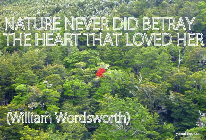 El árbol que me quitó el habla en un día de apicultura. Nueva Zelanda.